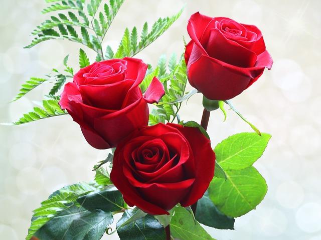 Roses Flowers Rou · Free Photo On Pixabay