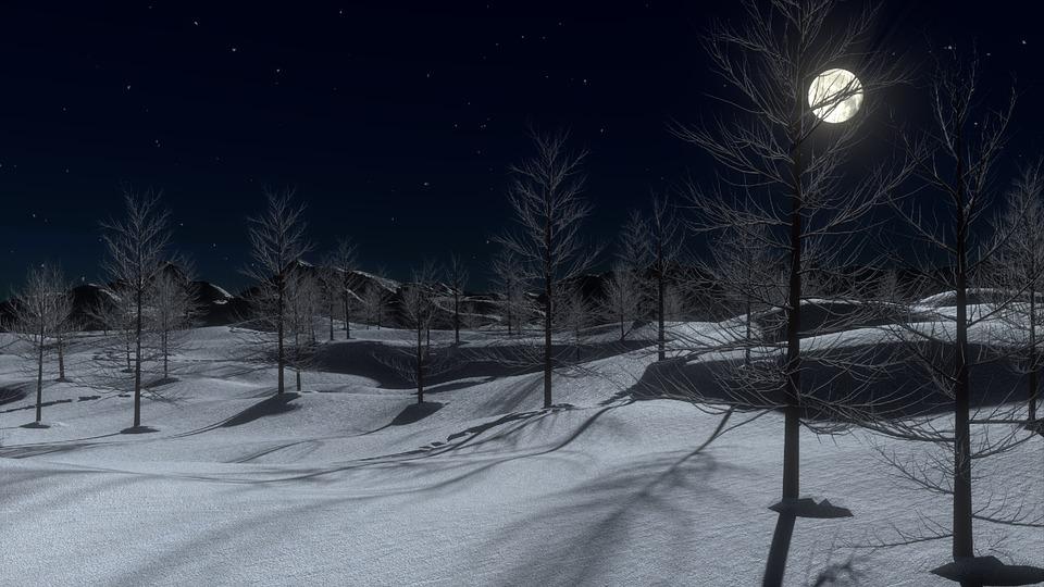 Snow, Night, Moon, Cold, Winter, Trees, Landscape