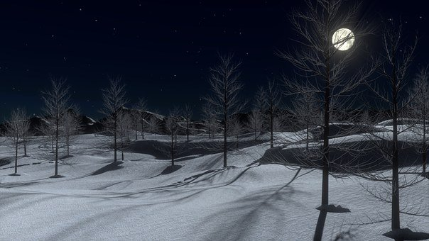Snow, Night, Moon, Cold, Winter, Trees