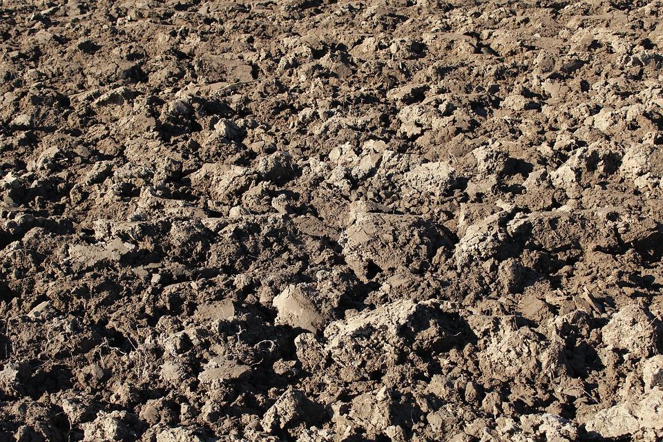 Arvenses, Terreno, Agricultura, Campo, Frutuosa