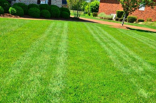 Lawn Care, Lawn Maintenance