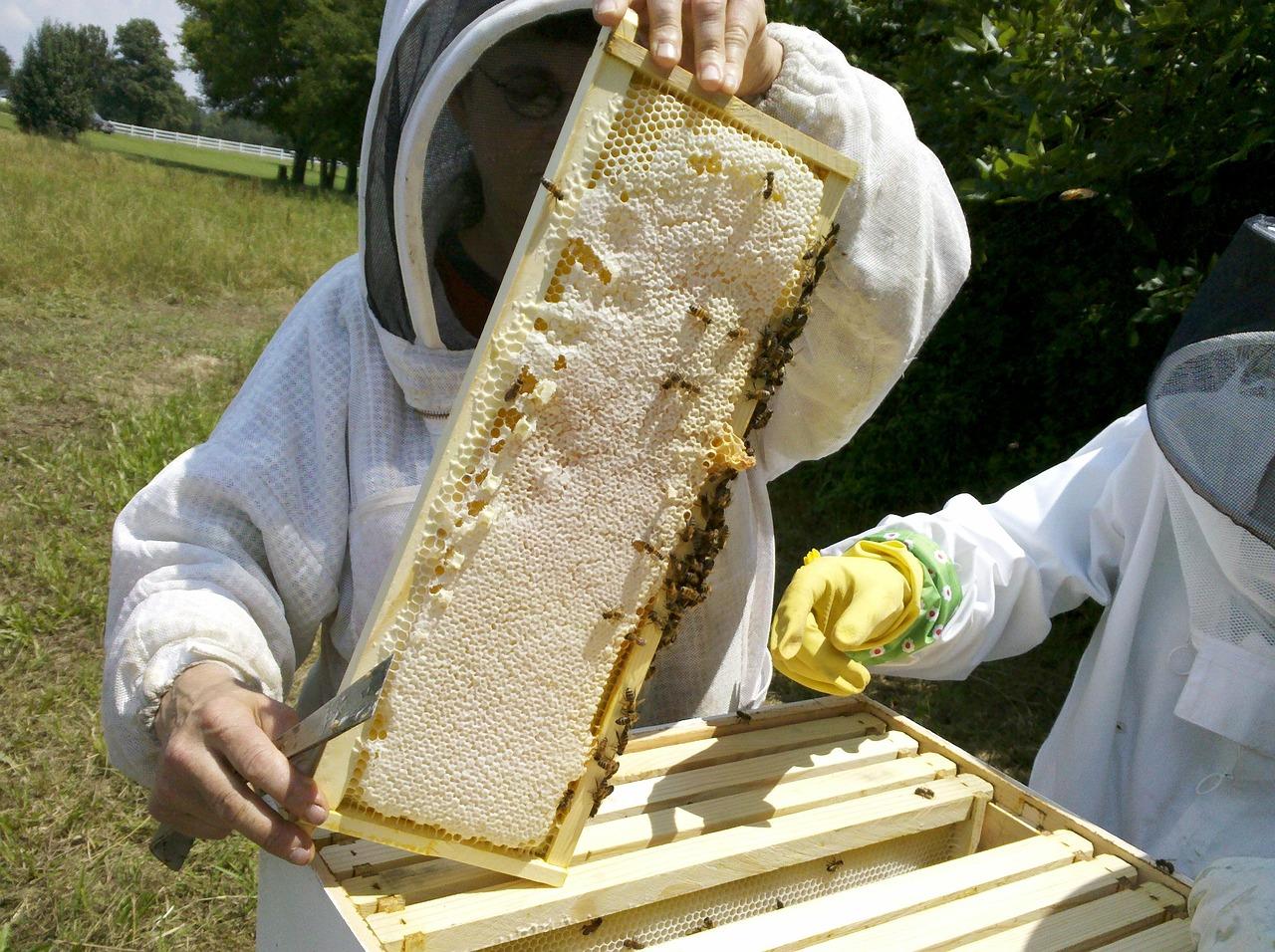ходе пчеловод улей пчелы картинки красотки кончают