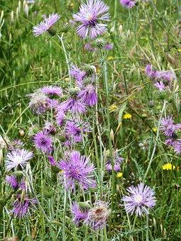 Blumen, Wild, Malve, Natur, Blume