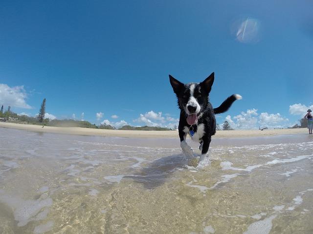 free photo  dog  summer  water  happy - free image on pixabay