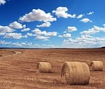 field, agriculture, harvest
