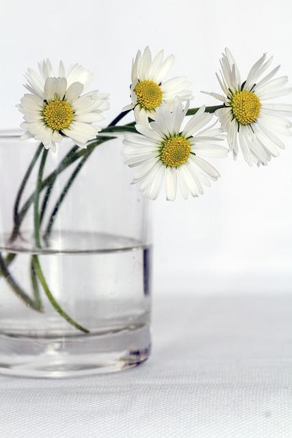 Free Photo Flowers Still Life Daisy Free Image On