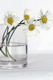 Цветы, Натюрморт, Ромашка, Ваза Для Цветов