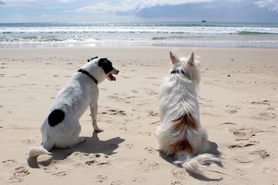 Hond strand vakantie
