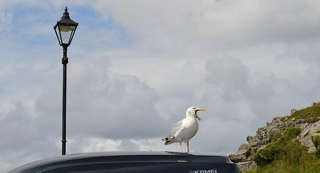 Sea Gull, Bird Song, Cornwall, Lamp Post