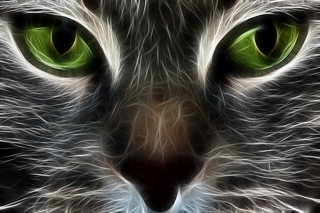 Free illustration: Cat, Fractal, Animal, Eyes - Free Image ... | 640 x 426 jpeg 99kB