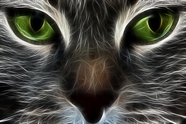 Cat Fractal Animation