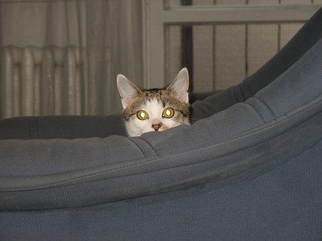 猫, アームチェア, キャッシュ, 非表示, 非表示にします, 外観