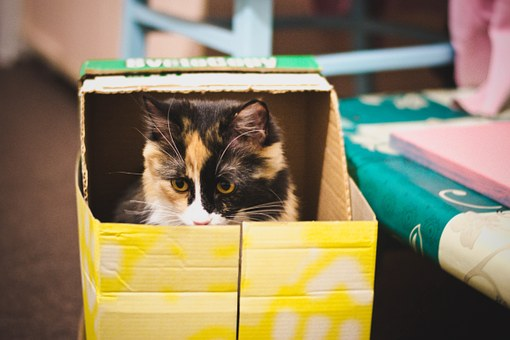 Kucing, Kotak, Predator