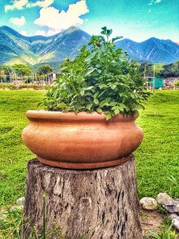 Pot, Plant, Nature, Outdoor, Mountains