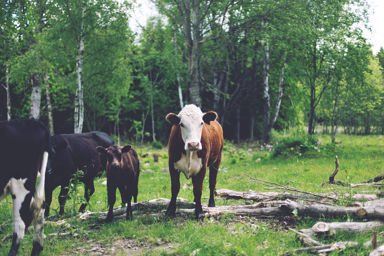 梦见骑大马回家 女人梦见骑大马