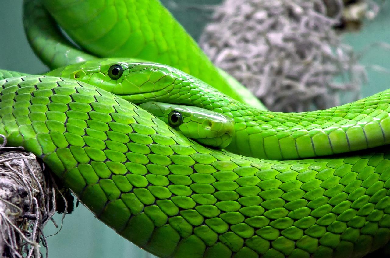 смотреть про мамбу змея