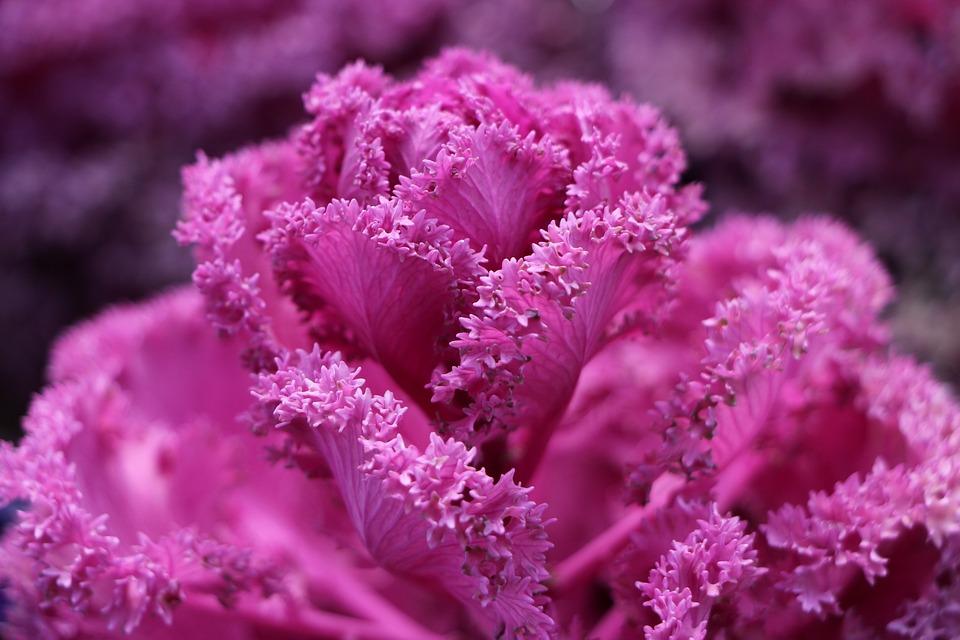 Flor As Vagens Lindas Foto Gratuita No Pixabay