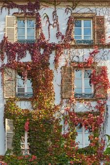 Fassade, Haus, Hauswand, Fenster