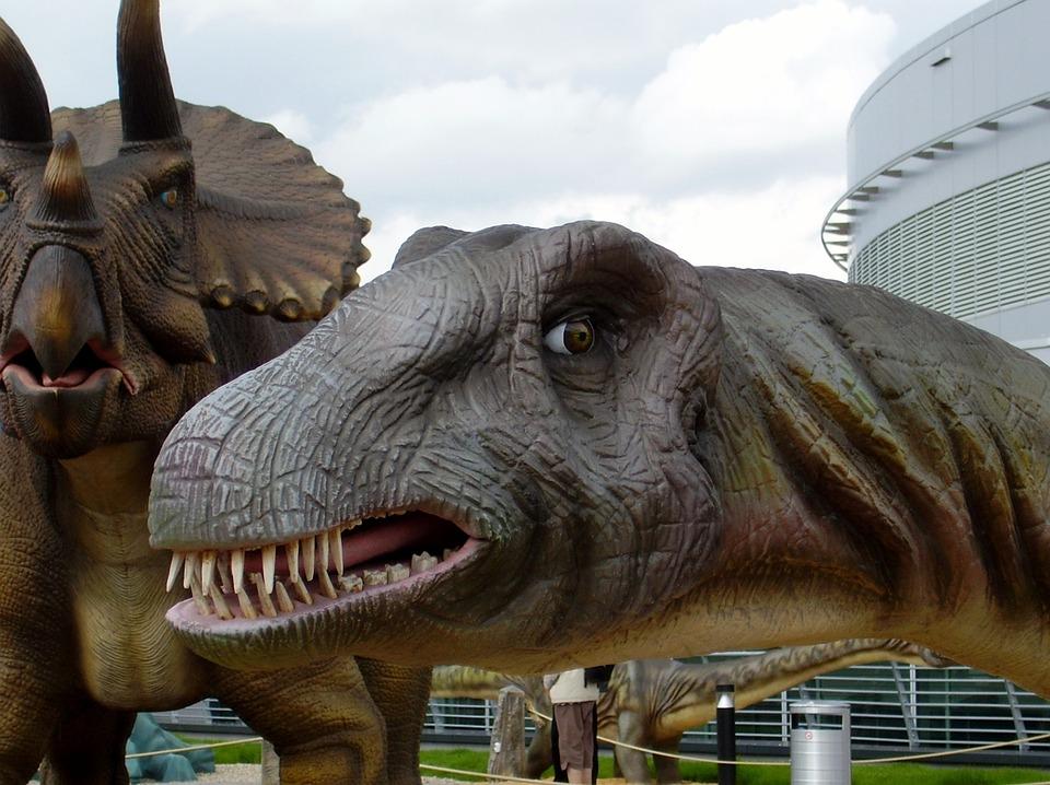 dinosaur brontosaurus head  u00b7 free photo on pixabay horse head vector images horse head vector free download