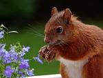 animal, squirrel, eat