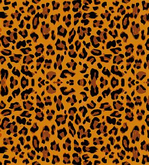 900 Free Leopard Snow Leopard Images Pixabay