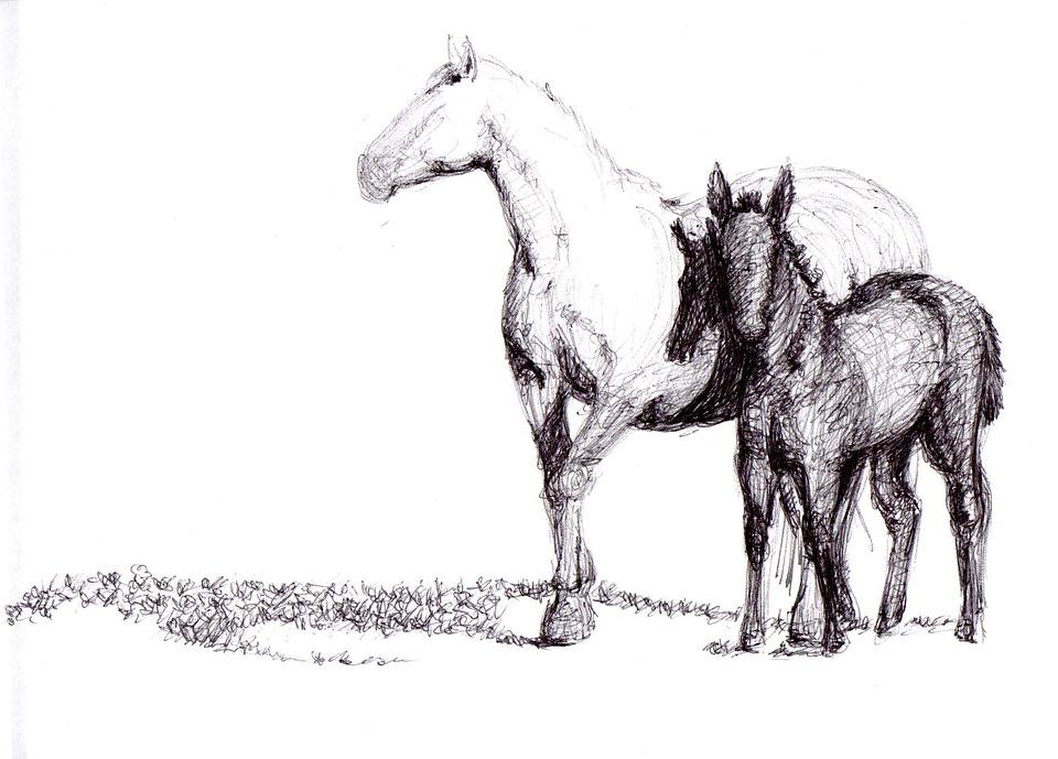 Foto gratis cavallo disegno penna arte immagine for Immagini di cavalli da disegnare