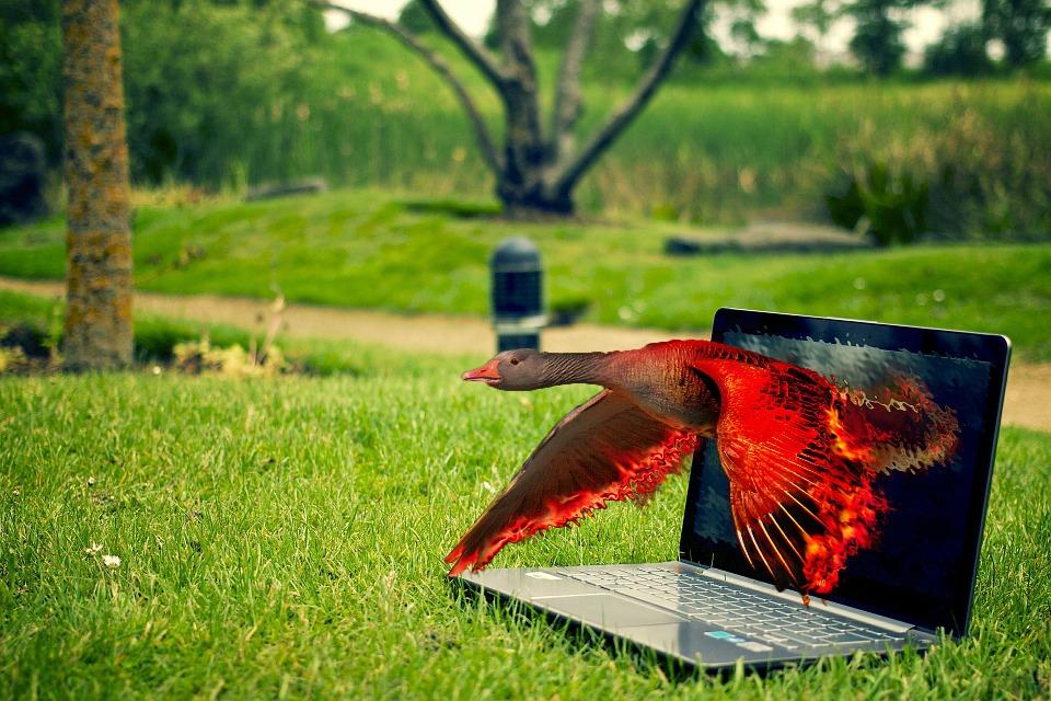 Заработок на фотошопе в Интернете способы получения дохода на дому сайты для работы