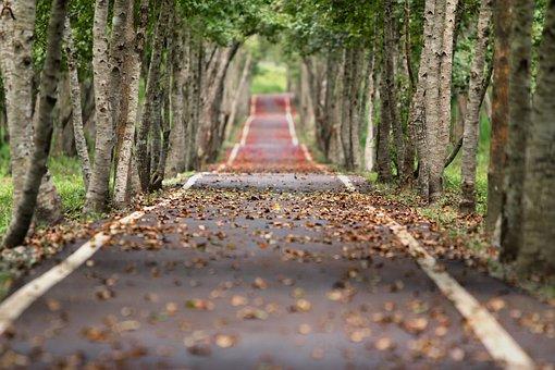 Avenue, Trees, Road, Tree Lined