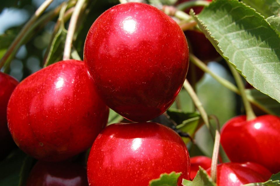 Картинки лето природа фрукты
