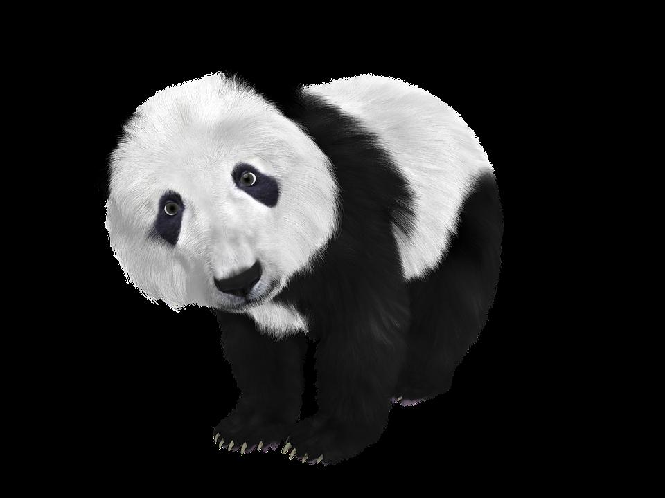 illustration gratuite panda b b panda chine toon image gratuite sur pixabay 659186. Black Bedroom Furniture Sets. Home Design Ideas