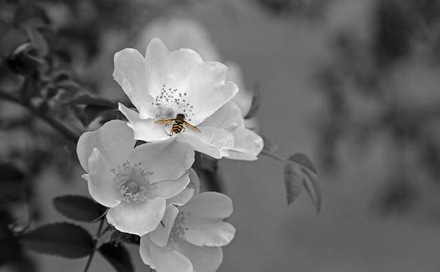 Flower Blossom Bloom · Free photo on Pixabay