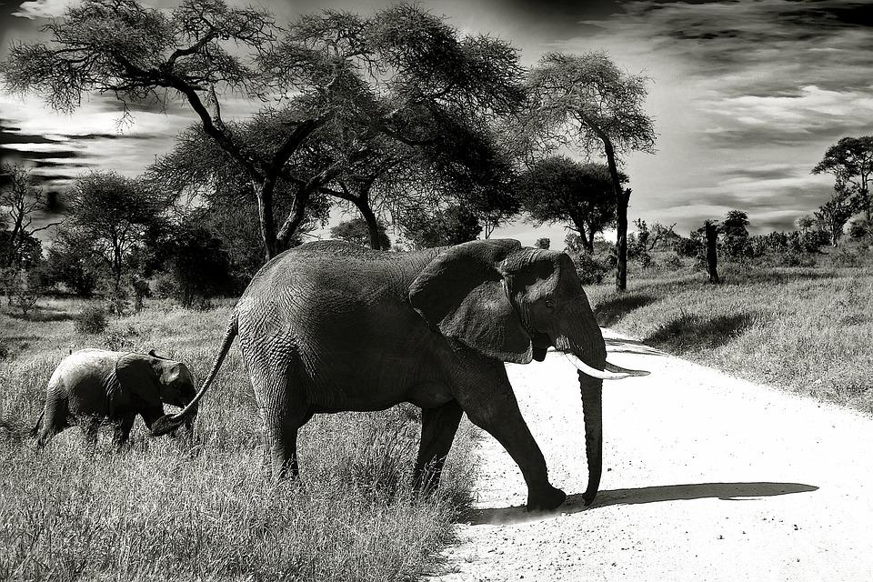 Photo gratuite l phant b b l phant image gratuite sur pixabay 660058 - Photos d elephants gratuites ...