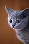 zwierzęcy, kot, kotek