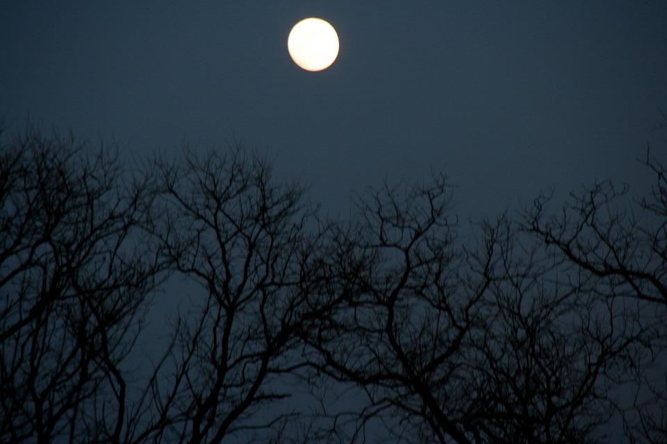 trees night moon blotch - photo #23