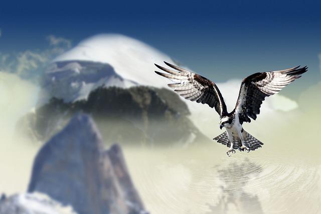 2018 White Raptor >> Free photo: White Tailed Eagle, Bird, Raptor - Free Image on Pixabay - 660907