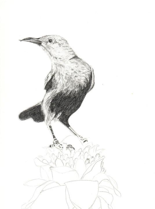 73 Gambar Binatang Menggunakan Pensil Terbaru