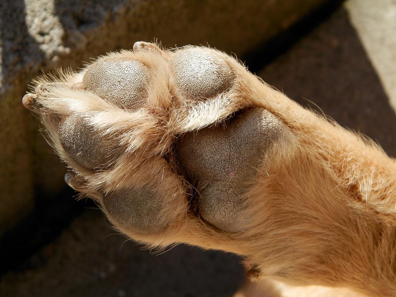 фото лапки собаки оказались профи