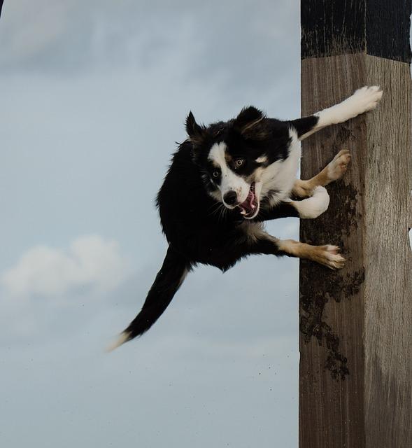 dog jumps on pole jumping 183 free photo on pixabay