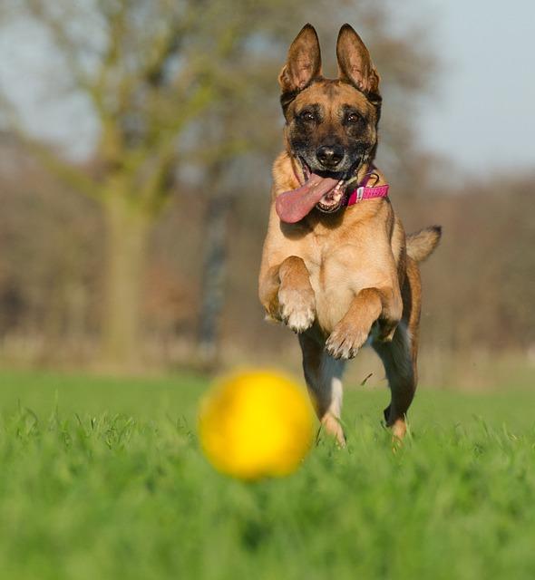 Dog Breeds Vs Race