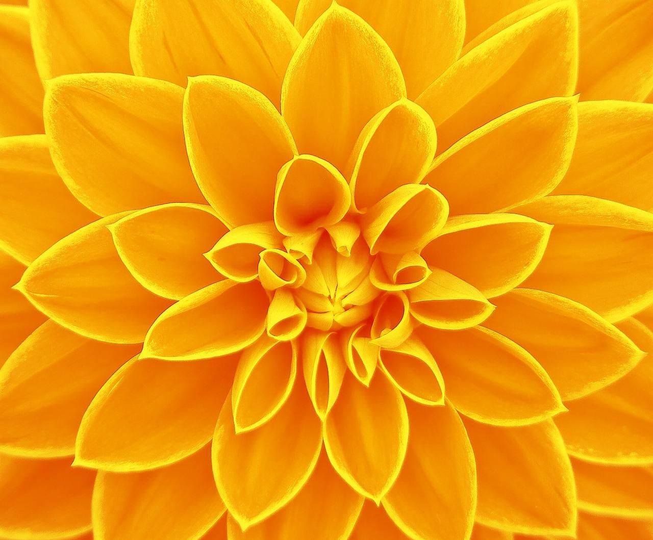 Большая желтая картинка