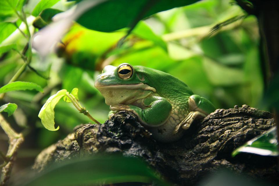 Frog Terrarium Free Photo On Pixabay