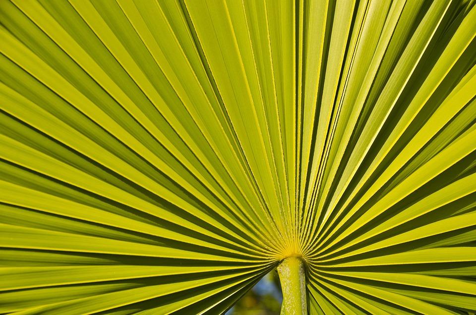 Línea Planta Simetría · Foto gratis en Pixabay
