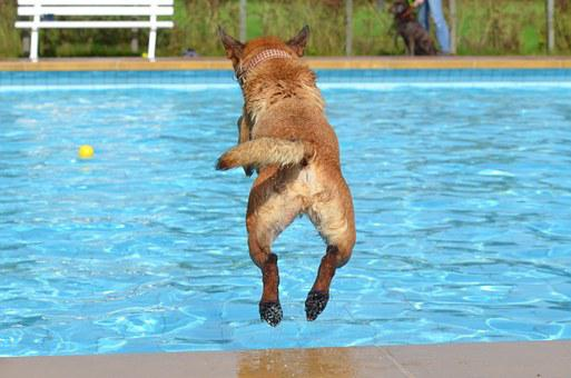 Dog, Outdoor Pool, Dog In The Water