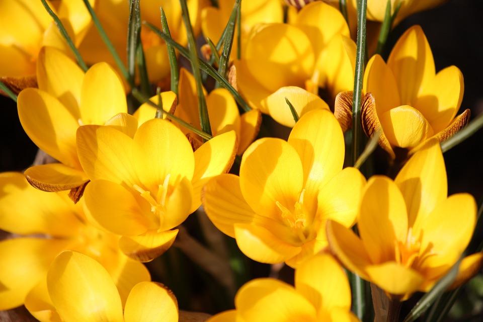 картинки с желтыми цветом жестов подскажет