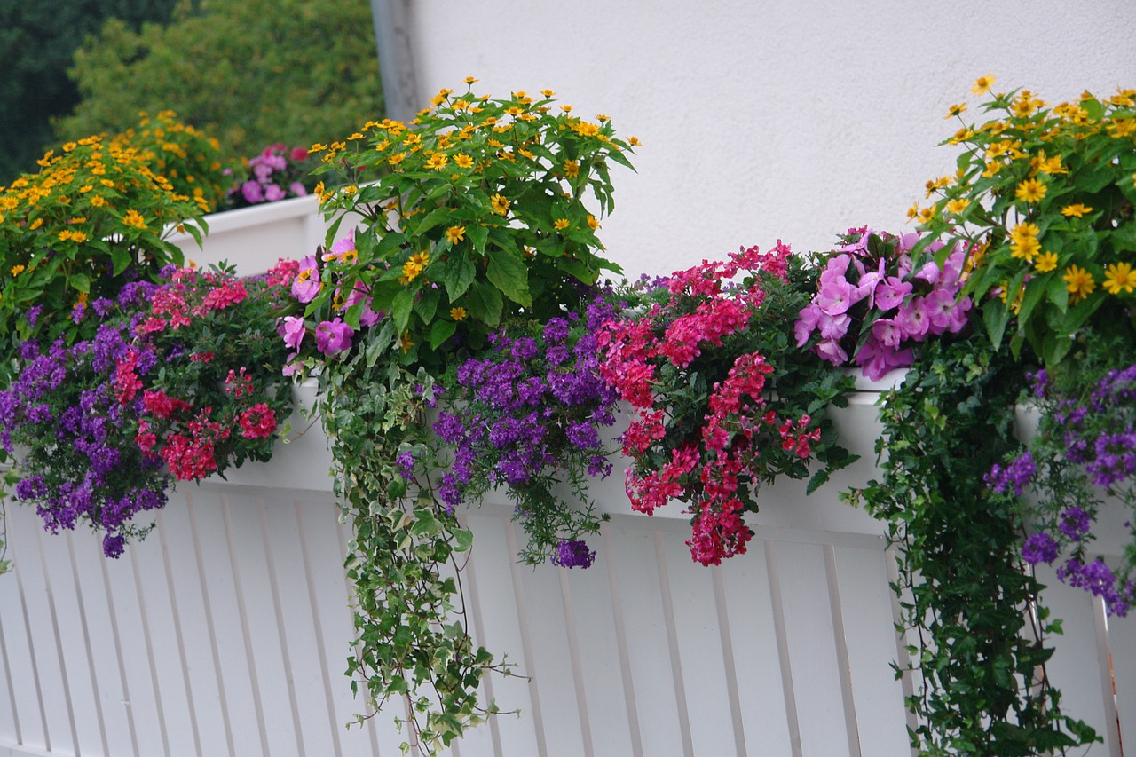 Вьющиеся растения на своем балконе.