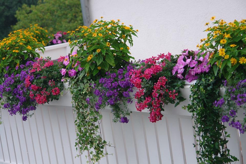 free photo balcony plants flowering plant free image on pixabay 665959. Black Bedroom Furniture Sets. Home Design Ideas