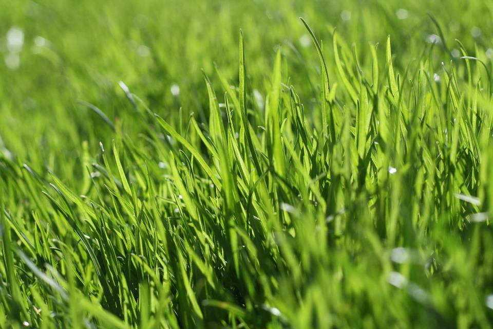 photo gratuite herbe pelouse nature jardin image gratuite sur pixabay 666284. Black Bedroom Furniture Sets. Home Design Ideas