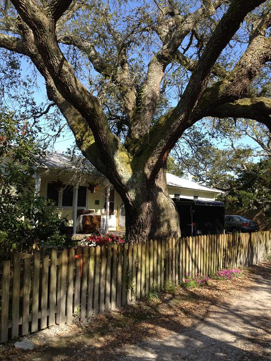 Tree, Fence, House, Shade, North Carolina, Outer Banks