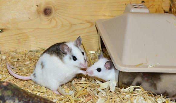 Low maintenance pets | Mice | Beanstalk Mums