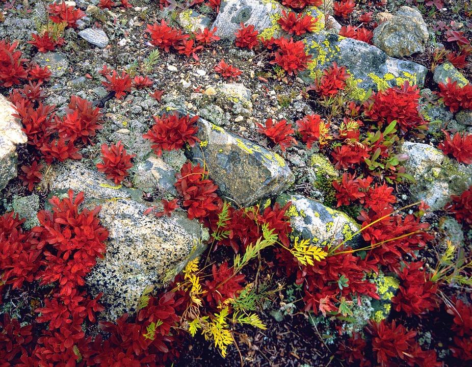 Boden Pflanzen Felsen Kostenloses Foto Auf Pixabay